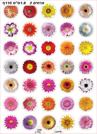פרחים 2