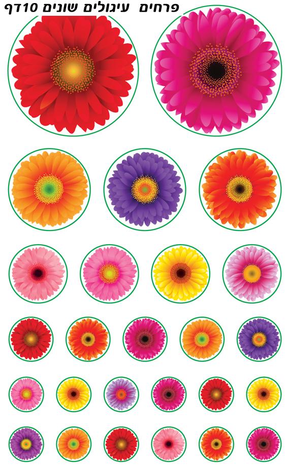 פרחים בגדלים שונים