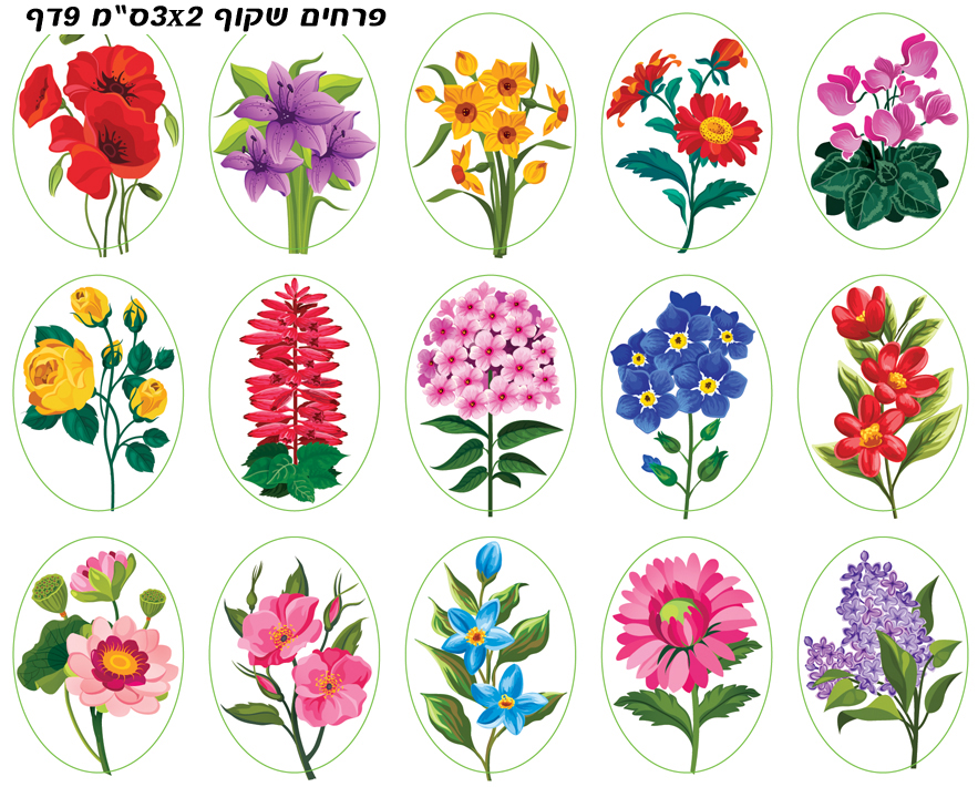 פרחים שקוף